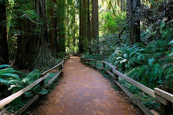 San Francisco, California Muir Woods National Monument